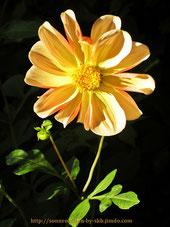 Sonnenseiten - Foto(s) ©skb