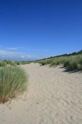 Strand bei Schaarendijke