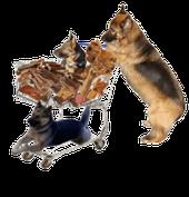 Hundezubehö und Hundefutterr bei Zoo KELLNER