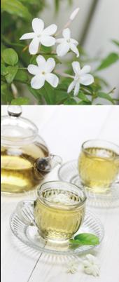 お茶,ルーツ,歴史,漢方の生薬,働き