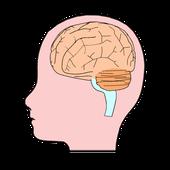 針灸刺激が及ぼす脳の反応