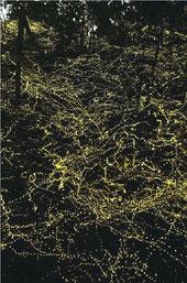 幻想的な輝きを放つヤエヤマヒメボタルの群れ=16日19時頃、西表島西部(川口ひろしさん提供)