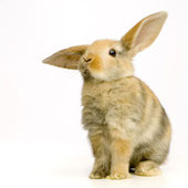 Kaninchen Ratgeber