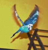 Fliegen ist unser Leben!