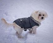 Chien avec un manteau dan sle froid et la neige