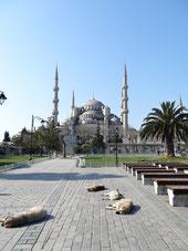 Mosquées et chiens errants - deux choses marquantes lors de mon arrivée en Turquie
