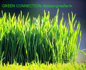 Weizengras frisch Weizengrassaft