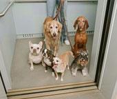 El perro y tus vecinos......  CONVIVENCIA EN CIUDAD pinchando en la foto.