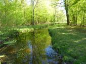 Ein Bach fließt sanft durch einen sonnendurchfluteten Wald. Die grünen Bäume spiegeln sich auf der Wasseroberfläche.