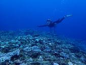 石垣島でのんびりダイビング