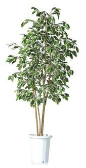 人工樹木ニューフィカスH1800