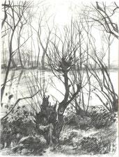 """""""Weide am Fluss"""", Bleistift auf Papier, 24 x 31,7, 2018"""