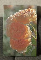 Leinwandbild 60 x 40 cm - Rosen