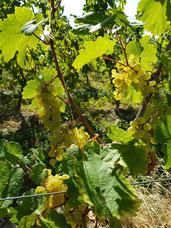Weißwein, Rose aus Italien, Spanien, Frankreich, Portugal und Deutschland