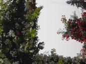 バラ達に切り取られた青空