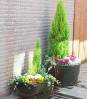 寄せ植え:中庭