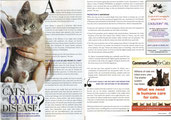 Feline Wellness Stephanie Bouchard lyme disease cats