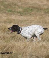 picardie-chasse.com: journée de chasse Somme et Oise la bécasse
