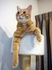 *「ちゃー」 キャットタワーに注目!