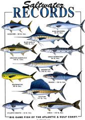 record de poisson de mer