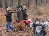 """Polonaise im Wald - unsere Hunde befürchten durch die allgemeine Hektik ein sich anbahnendes Gerangel zwischen den Rudelmitglieder. Ihr Instinkt sagt ihnen sofort: """"Das muss verhindert werden!"""""""