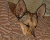 Tilly hat es nach 8 Jahren geschafft- endlich in Ruhe einkuscheln zu dürfen