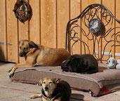 Loki darf auf seiner Pflegestelle bleiben bei Vendi und Rita! Ein Traum für alle drei