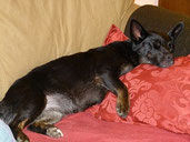 Juhu!!! Missy-Maus muss ihr Sofa nicht mehr tauschen, sie bleibt auf ihrer ehemaligen Pflegestelle