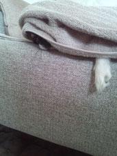 07.17 毛布にくるまる犬。いつも自力でかなり器用にくるまっています。