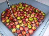 Äpfel in der Wanne