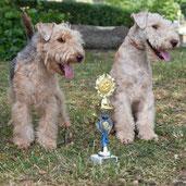 Lakeland -und Airedale Terrier