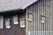 Holzkästen für Fledermäuse
