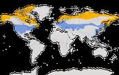 karte zur Verbreitung der Raufußbussard (Buteo lagopus)