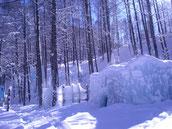 氷点下の森会場