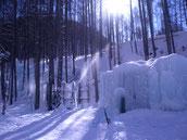 氷点下の森 氷の洞窟