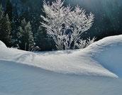氷点下の森周辺の冬景色