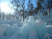 写真家も満足、氷点下の森