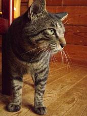 保護猫奮闘記ブログ猫大好き日本料理店
