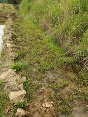 泥と草で埋まった水路