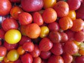 Tomaten in verschiedenen Farben! Foto Bio Gärtnerei  Kirnstötter