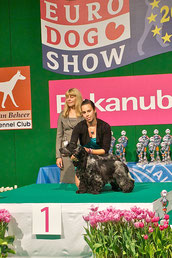 Best Brace Euro Dog Show '11-NL