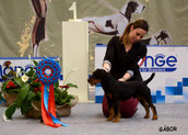 Aron BEST IN SHOW Alessandria '16
