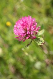 élixir floral