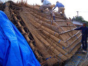 葦葺き屋根の断面