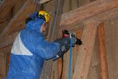 Holzwurmbekämpfung und Holzschutz