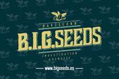 big seeds banco semillas feminizadas de marihuana de Barcelona