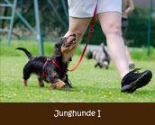 Junghunde Hundeschule München