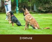 Hundetraining Erziehung Gruppe in München