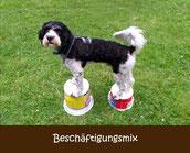 Mobility Agility Longieren München Treibball