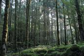 苔の森に降り注ぐ朝日(縄文杉ガイドツアー)